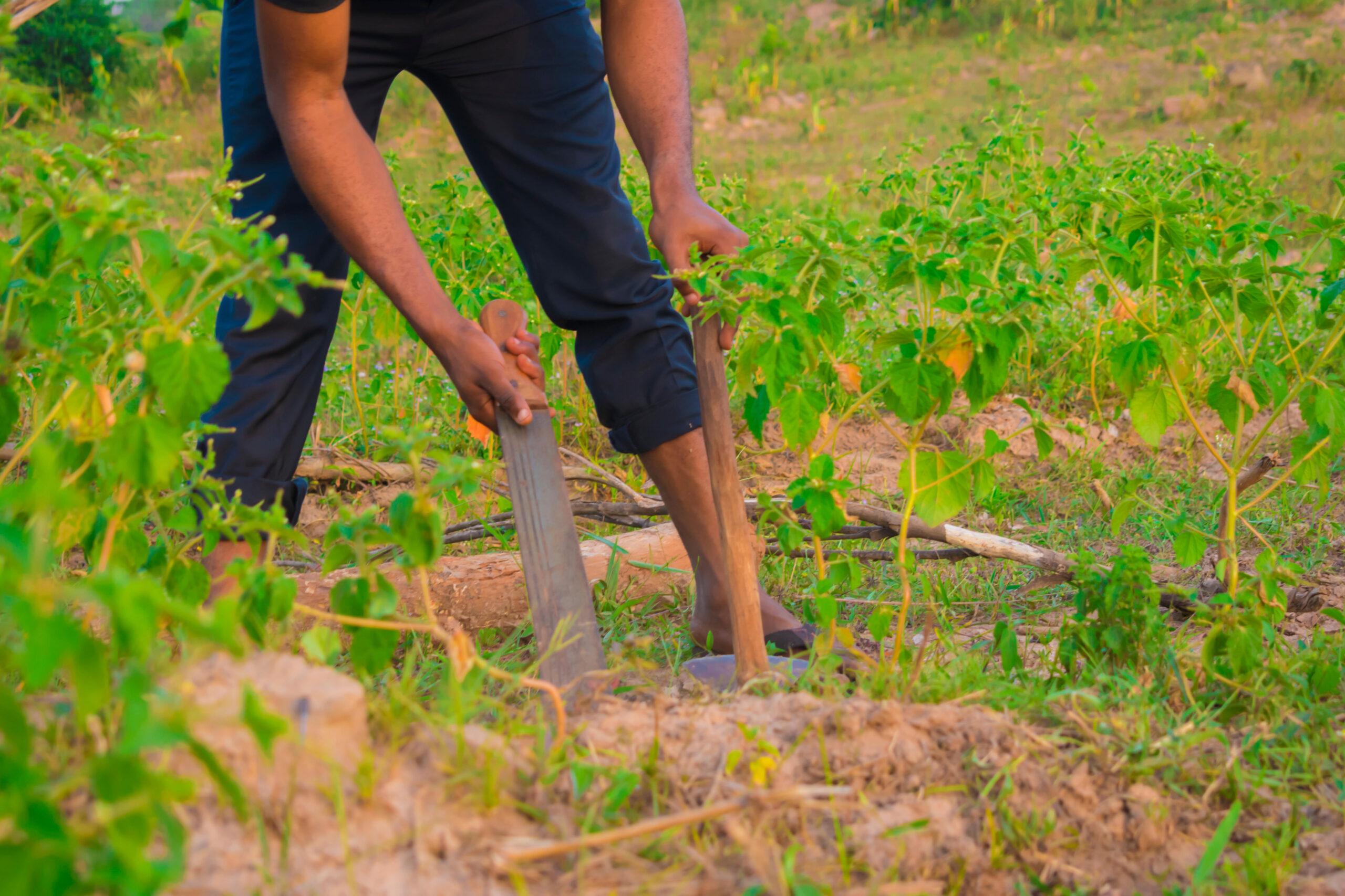 Baumsetzlinge werden für das Klima gepflanzt